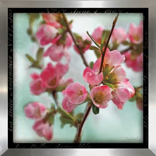 Quince Blossoms II