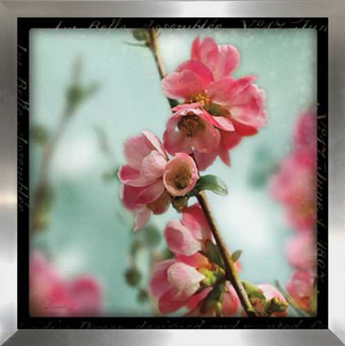 Quince Blossom III